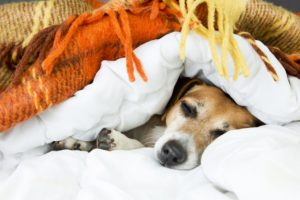 Shutterstock Fall Sleep Dog